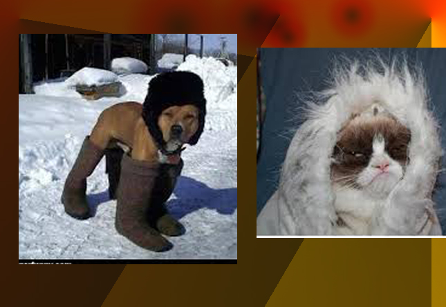 winter funny photo 1